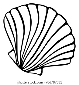 Monochrome black and white sea shell seashell silhouette ink line art sketch isolated vector