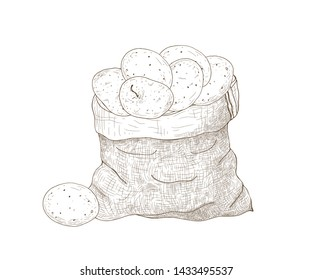 Monochrome drawing of potato tubers in burlap bag. Harvested tuberous food crops. Natural organic vegetables isolated on white background. Hand drawn vector illustration in elegant vintage style.
