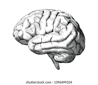 Monochrome engraving drawing brain illustration side view comic style isolated on white background