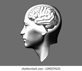 Imágenes, fotos de stock y vectores sobre Brain Isolated