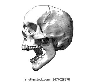 Monochrome engraving drawing human skull open mouth jaw side view illustration isolated on white background