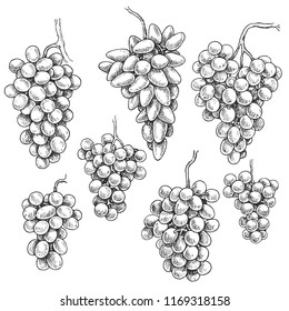 Monochrome grapes set. Hand drawn grape bunches isolated on white background. Vector sketch.