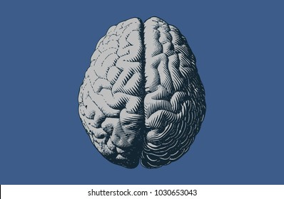 Monochrome gray engraving brain illustration in top view isolated on blue background