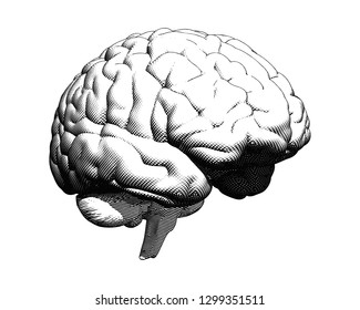 Monochrome human brain crosshatch engraving in perspective side viewillustration isolated on white BG