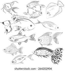 Monochrome images of fish
