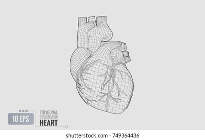 Monochrome polygonal black wireframe line of human heart illustration isolated on white background