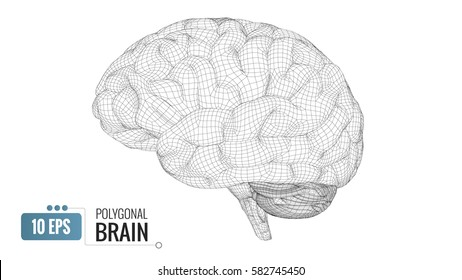 Monochrome polygonal wireframe brain isolated on white background
