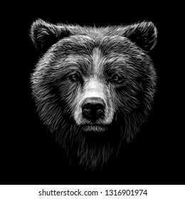 Monochrome portrait of a brown bear looking ahead against a black background.