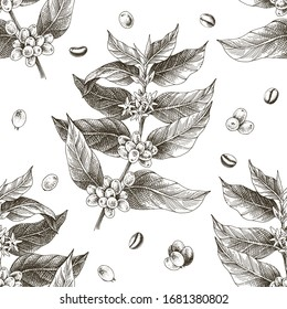 Monochrome seamless pattern with hand drawn coffee tree branches and beans. Vector illustration in retro style
