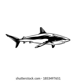 Monochrome shark vector illustration. Retro predator fish or tiger-shark for sticker. Hawaii, wildlife and tropical underwater animals concept can be used for retro template, banner or poster