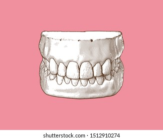 Monochrome vintage engraved drawing tooth and gum close jaw represent for dental occlusion in top front view illustration isolated on pastel pink background