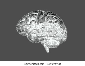 Monochrome vintage engraving drawing brain in negative value isolated on gray background