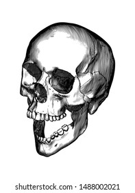 Monochrome vintage engraving drawing human skull open jaw or screaming perspective view isolated on white background
