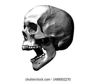 Monochrome vintage engraving drawing human skull open mouth jaw or screaming side view crosshatch style illustration isolated on white background