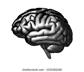 Monochrome woodcut vintage engraved drawing human brain side view vector illustration isolated on white background