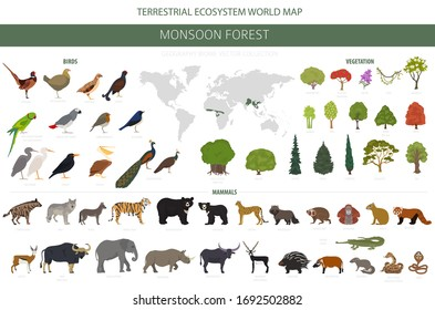 Monsoon forest biome, natural region infographic. Terrestrial ecosystem world map. Animals, birds and vegetations design set. Vector illustration