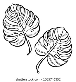 Monstera contour hand drawing. Black and white line art illustration