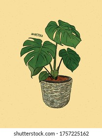 Monstera deliciosa, also known as the Swiss Cheese plant, hand draw sketch vector.
