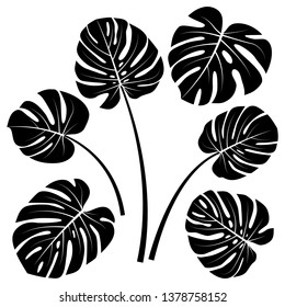 Monstera deliciosa or Swiss cheese plant leaves silhouette. Silhouette of tropical monstera leaves on white background. Design elements for greeting invitation card poster banner wallpaper print