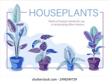 Monstera, ficus, banana, fern. Houseplants. Set. Vector floral poster. Iimage of room flowers.