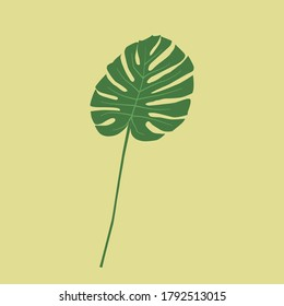 Monstera isolated on yellow background