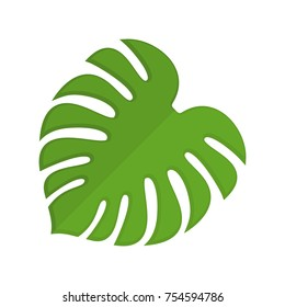 Monstera isolated. Tropical leaves on white background. Vector illustration