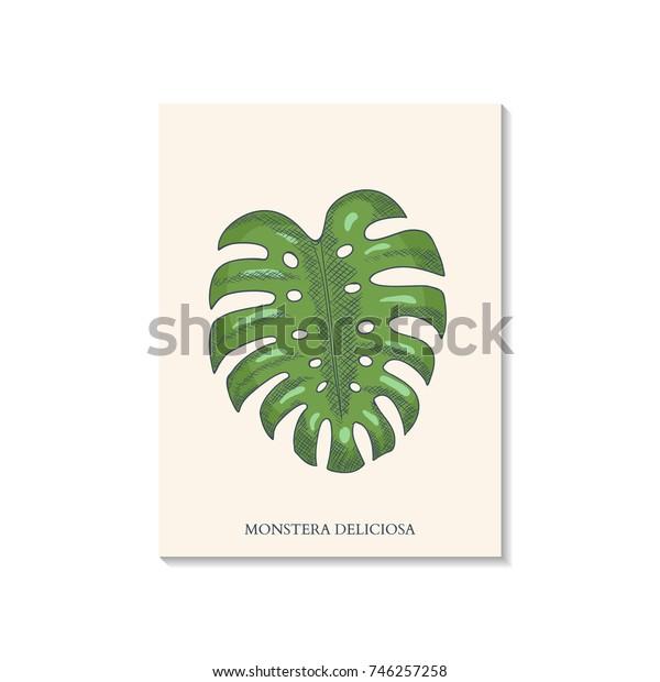 Monstera Leaf Hand Drawn Engrave. Vector illustration