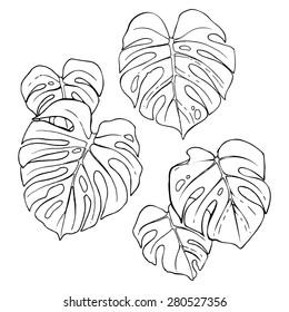 Monstera leaves set, hand drawn design elements.