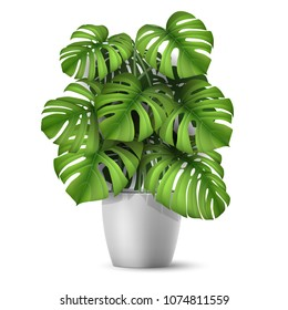 Monstera in a pot. Tropical plant for interior decor of home or office. Vector illustration in vector realistic 3d style.