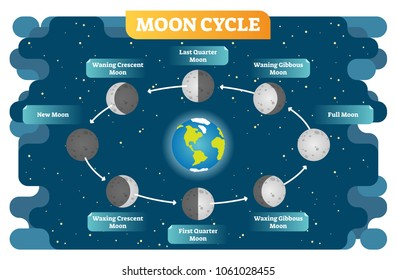 Moon cycle vector illustration diagram poster with all moon phases from new to full moon and waning, waxing, quarter stages. Scene on cosmos background.