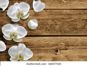 Moon orchid on natural brown wooden background top view. Wood texture close up. Vector illustration.