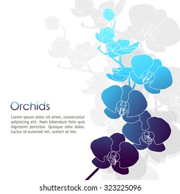 Moon orchid outline vector with blue color tone on white background. Moon orchid outline Illustration.