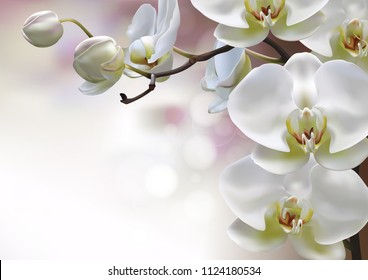 Moon orchids flowers closeup on purple gradient with bokeh background. Vector illustration of realistic white orchids flowers in branch isolated.