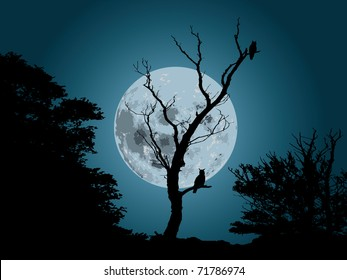 moonlight forest background with silhouette of owl