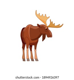 Moose or Elk, Alces alces. Beautiful animal in the nature habitat front view. Wildlife scene. Cartoon character vector flat illustration isolated on a white background.