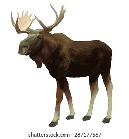 Moose hand drawn vector colorful illustration