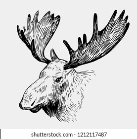 Moose head. Hand drawn sketch converted to vector