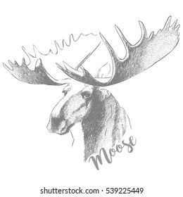 moose head with huge antlers sketch vector illustration isolated on white background.