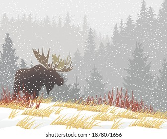 Moose silhouette in fall snow storm forest background