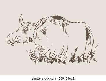moose vector, hand draw sketch