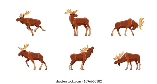 Moose wild animal set of vector illustrations. Funny character in various cartoon design poses. Isolated on a white background.