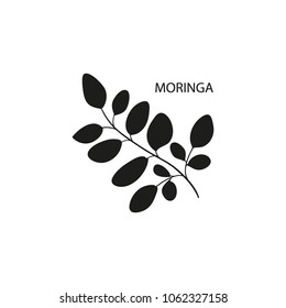 Moringa. Branch, leaves. Black silhouette on white background.