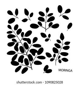 Moringa. Branch, leaves. Black silhouette on white background. Set
