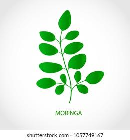 Moringa. Plant. Logo, emblem, symbol, symbol.