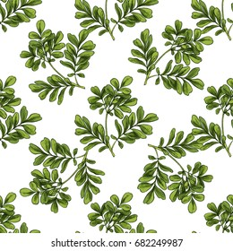 Moringa. Seamless botanical pattern, Realistic full color vector sketch illustration.