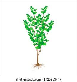 Moringa Tree Logo Design Inspirations