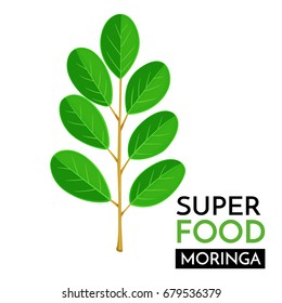 Moringa vector icon. Healthy detox natural product superfood illustration for design market menu superfood .