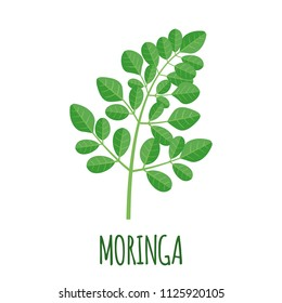 Moringa vector logo in flat style. Isolated object. Superfood moringa medical fruit. Vector illustration.