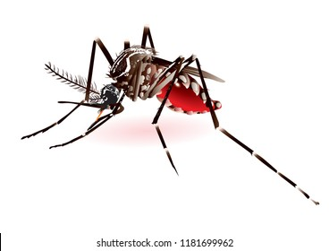 mosquito blood vector