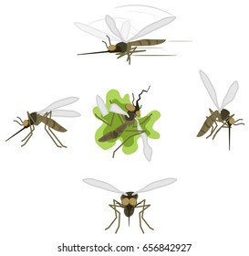 Mosquito cartoon character actions icon set, vector illustration, isolated, over white